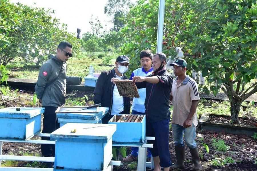 Bahri Petani Lebah Madu Sukses Asal Bengkalis Raup Jutaan Rupiah Perbulan, Ikuti Kiatnya