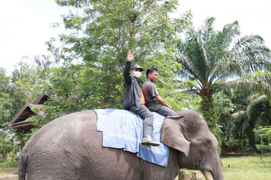 Nikmati Sensasi Nunggang Gajah Sarma Bersama Wabup Bengkalis Bagus Santoso